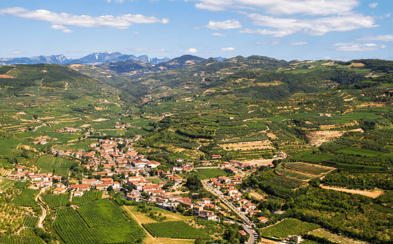 Vinice Conte di Campiano Brindisi uprostřed léta