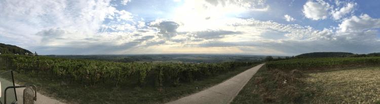 Vinice Lukase Kesselringa v německém regionu Falc